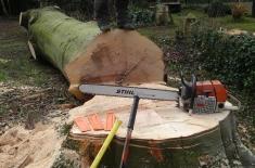 Clarkes Tree Care Tree Felling