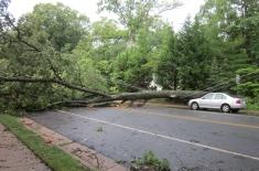 Clarkes Tree Care